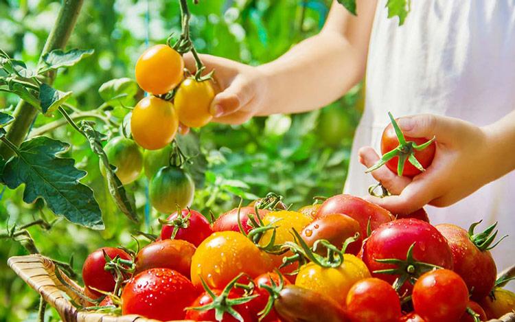 Cultivez votre potager - Jardinerie Clarac
