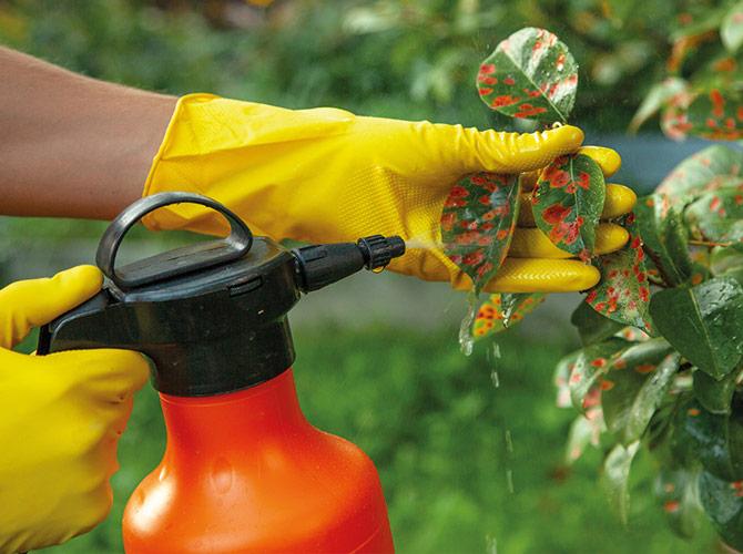 Soignez et protéger vos végétaux
