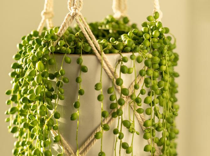 Végétalisez votre intérieur - Jardinerie Clarac